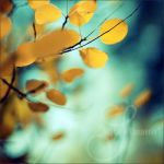 falling gold by prismes