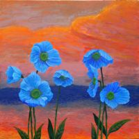 Blue Poppies at Sunset by Satsumo