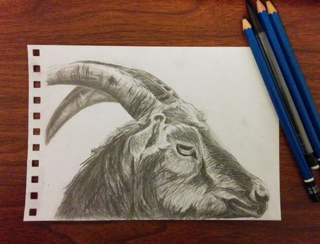Black Phillip by RizOps