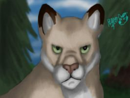 Cougar by renzo-petrucci