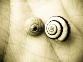 Two Snail Shells by Youcef07