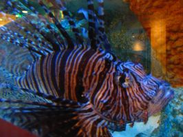 Lion Fish 1 by Zepher-Stock
