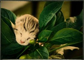 Kitty Flower by piove