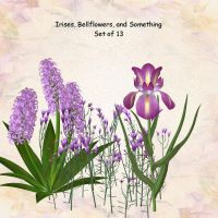 Irises and Bellflowers by oldhippieart