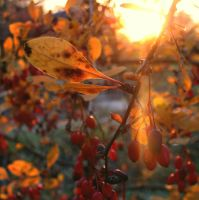 Fruits of autumn by temporariness