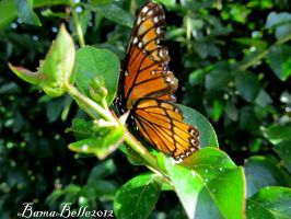Butterfly by BamaBelle2012