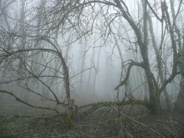 Fog Branch by Track-Maidens
