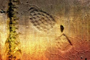 Footprints In The Sand.8 by Bobbyus