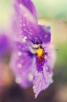 Drenched by purpleface