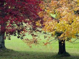 The Fall Trees by FFgeek97116