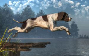 Diving Dog by deskridge