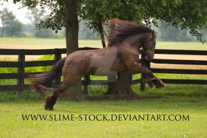 smokey black irish cob rear + buck by slime-stock