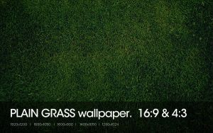 Plain Grass by sniperyu