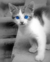 Blue Eyed Kitty by lizrabon
