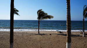 Mexico : Beach Trees by Starshadowx2