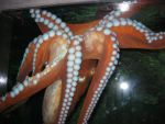 giant octopus by whisperingforest