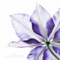 Ghost Clematis by andras120