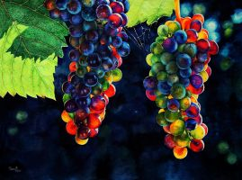 Sunny grapes by vasoiko