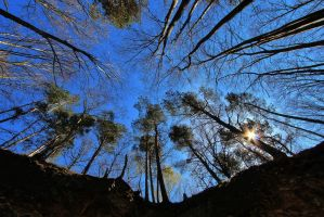 forest in Berggiesshuebel by MT-Photografien
