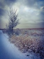 The Frosted Path by JANorlin