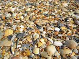 Ocean of Shells by Outofthisworld