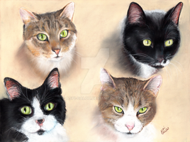 CM - Four little kitties by Aspi-Galou