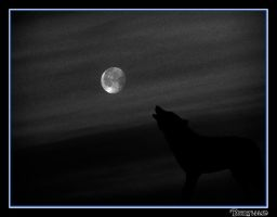 The Howl by Dhryllian