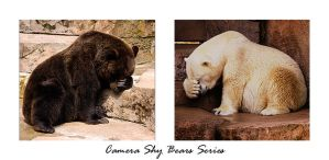 Camera Shy Bears Series by jazzkidd