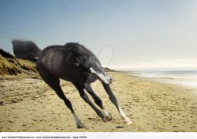 Beach Horse Manip by luckydesigns