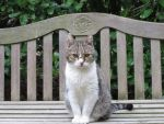 Cat of the bench by mrscats