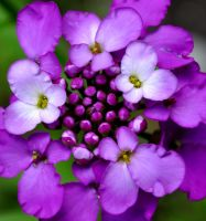 A Passion for Purple by Forestina-Fotos