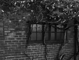 Brick and Vines by MFDonovan