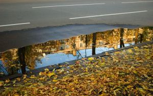 Leaves and reflection by saltov-man