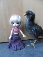 little dal and chicken by loekie3