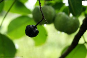 like an apple by dianapple