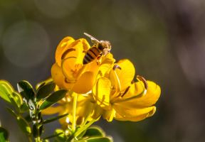 The Bee by droy333