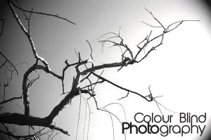 Branches black and white. by ANTHONY1314