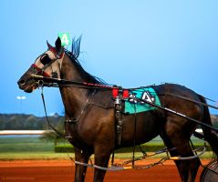 harness racer by venomxbaby