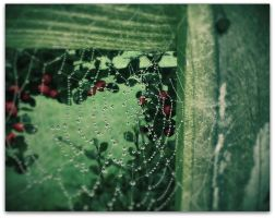 Winter Webs by PinkBeezi