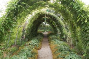 Green  tunnel 02 by ant99