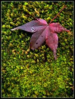 Leaf and Moss by chinotenshi