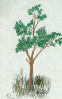 Study of A Young Tree In Color by samtrevino0