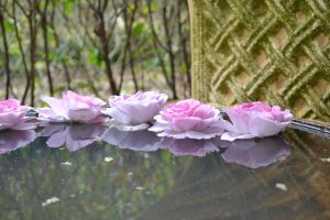 Flowers on Water reflection by kadomada
