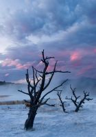 Mammoth Hot Springs by sgwizdak