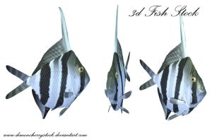 Fish PNG Stock by DemoncherryStock