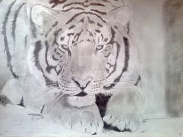 Siberian Tiger in Rest by Phil-FR