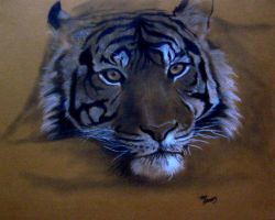 Tiger5 by brooks1904
