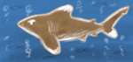 SW 2012 Day 1 - Oceanic White Tip by Domisea