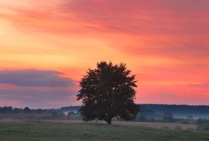 Old peartree in the evening by mannromann