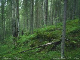 Forest by MarianHellequin